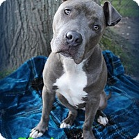 Adopt A Pet :: Slater - Toledo, OH