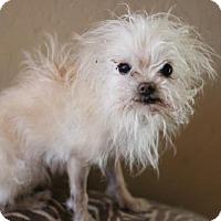Adopt A Pet :: Pencil - Phoenix, AZ