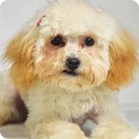Adopt A Pet :: Chantilly - Dublin, CA