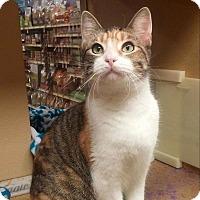 Adopt A Pet :: Samora - Arlington/Ft Worth, TX