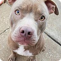 Adopt A Pet :: Bain - Conroe, TX