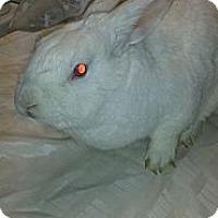 Adopt A Pet :: Hercules - Conshohocken, PA