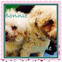 Adopt A Pet :: Bonnie - Los Angeles, CA