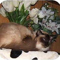 Adopt A Pet :: Sadie - Dallas, TX