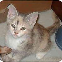 Adopt A Pet :: Lily - Harriman, NY, NY