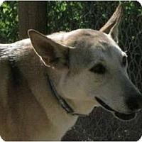 Adopt A Pet :: Girl - Golden, CO