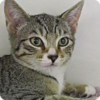Adopt A Pet :: Rainy - Seminole, FL