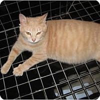 Adopt A Pet :: Stormy - Jeffersonville, IN