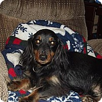 Adopt A Pet :: Romeo - Alexandria, VA
