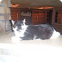 Adopt A Pet :: OREO - Port Richey, FL