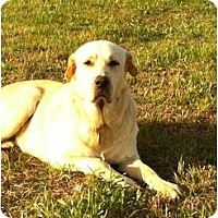 Adopt A Pet :: Missy  *Adopted - Oklahoma City, OK