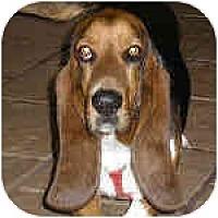 Adopt A Pet :: Ebby - Phoenix, AZ