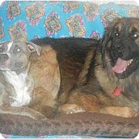 Adopt A Pet :: Ditka  ADOPTION PENDING!! - Antioch, IL
