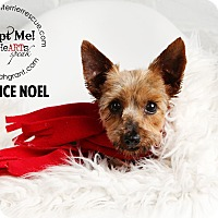Adopt A Pet :: Clarice Noel - Omaha, NE