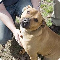 Dog Adoption Hot Springs Ar