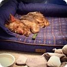 Adopt A Pet :: Canela