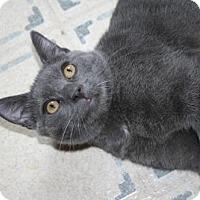 Adopt A Pet :: Simon - Baltimore, MD