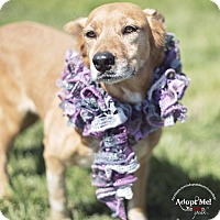 Adopt A Pet :: Flame - Iola, TX