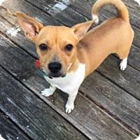 Adopt A Pet :: Hazel - Memphis, TN