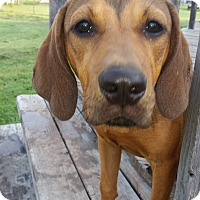 Adopt A Pet :: Just Too Cute - Dallas, TX