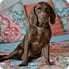 Adopt A Pet :: Cain