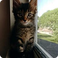 Adopt A Pet :: Emmit - Ogden, UT