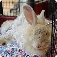 Adopt A Pet :: Nicki - Elyria, OH