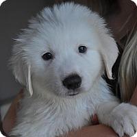 Adopt A Pet :: Lola - Atlanta, GA