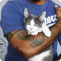 Adopt A Pet :: AJ - Marina del Rey, CA