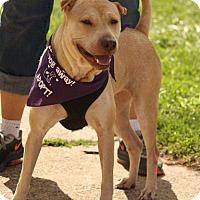 Adopt A Pet :: Carly - River Rouge, MI