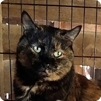 Adopt A Pet :: Autumn - Brighton, MO