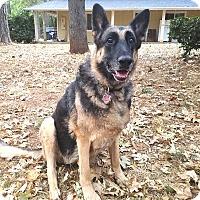 German Shepherd Dog Dog for adoption in Pleasant Grove, California - Leia
