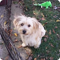 Adopt A Pet :: Bridget - Milton, GA