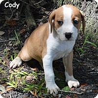 Adopt A Pet :: Cody - Lake Pansoffkee, FL