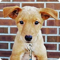 Adopt A Pet :: Vulcan *Juno's Puppy* - Gretna, NE
