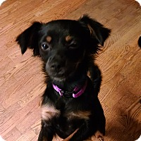 Adopt A Pet :: Betsy - Palestine, TX