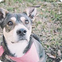 Adopt A Pet :: Gabby - San Leon, TX
