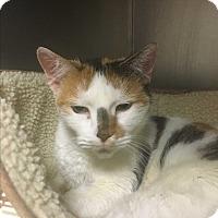 Adopt A Pet :: Callie - Saylorsburg, PA