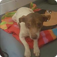 Adopt A Pet :: 17-01-0135b Arwen - Dallas, GA