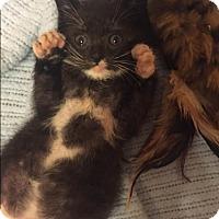 Adopt A Pet :: Wilson - Plattekill, NY