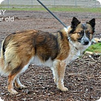 Adopt A Pet :: Ginny - Yreka, CA