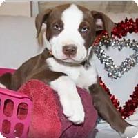 Adopt A Pet :: Prim - Alamogordo, NM