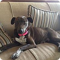 Adopt A Pet :: Jackie - Harrisburgh, PA
