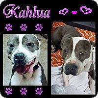 Adopt A Pet :: Kahlua - Snellville, GA