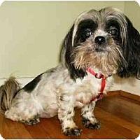 Adopt A Pet :: Bree - Mooy, AL