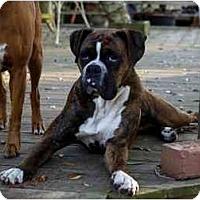 Adopt A Pet :: Magnum - Albany, GA