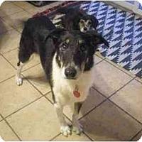 Adopt A Pet :: Jody - Summerville, SC