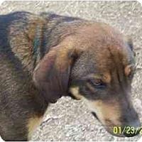 Adopt A Pet :: Wyoming - Wakefield, RI