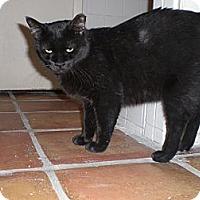 Adopt A Pet :: Orion - Scottsdale, AZ