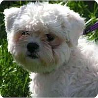 Adopt A Pet :: Elvis - Rigaud, QC